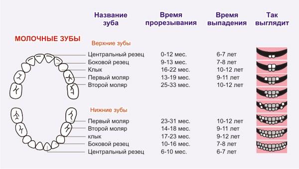 Схема роста молочных зубов у детей фото