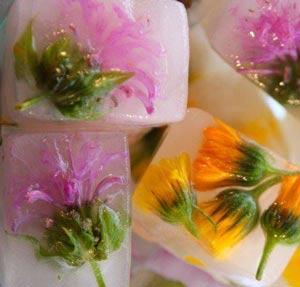 кубики из льда с травами